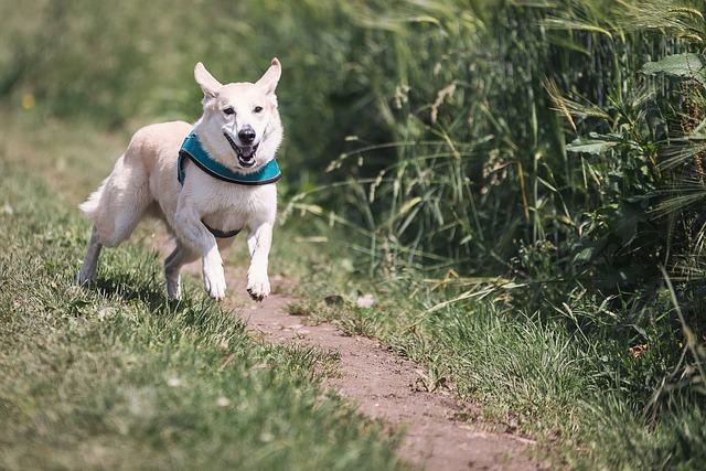 Meu cachorro se perdeu: o que faço?