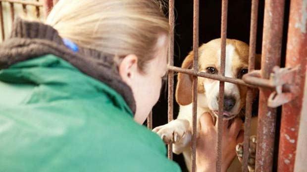 ONG compra cães que iriam virar comida