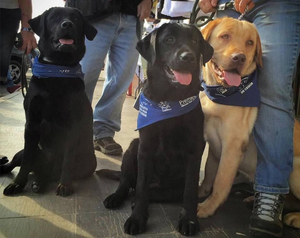 ONG cria campanha para continuar treinamento de cães-gui