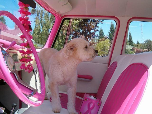 Passear de carro com cachorro: saiba o que pode e o que não pode