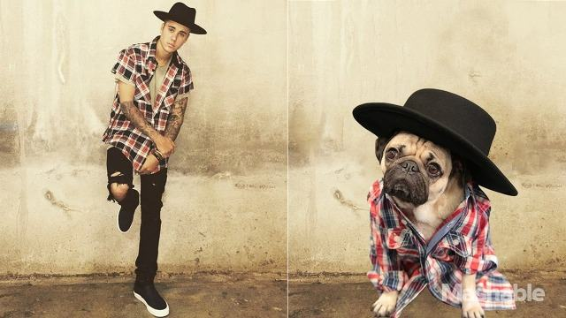 pug-justin-bieber-usando-chapeu
