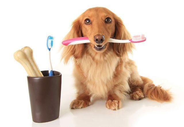 Saiba como escovar os dentes do seu cachorro corretamente