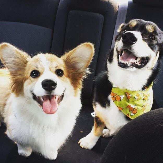 sorriso-duplo