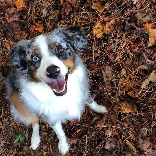 veja-20-cachorrinhos-felizes-para-quem-esta-triste