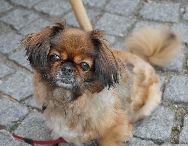 Apresentamos 10 raças de cães de colo