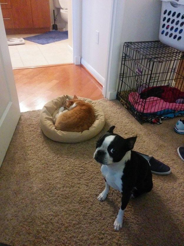 Cachorro e gato em lavanderia