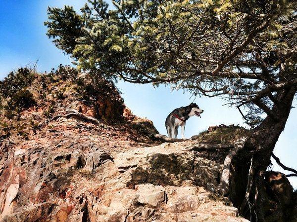 Cachorro em sombra de árvore