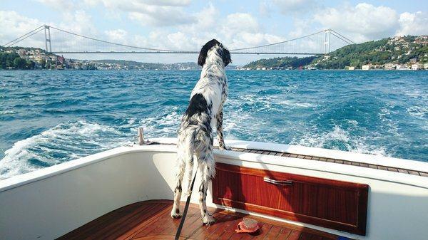 Cachorro navegando