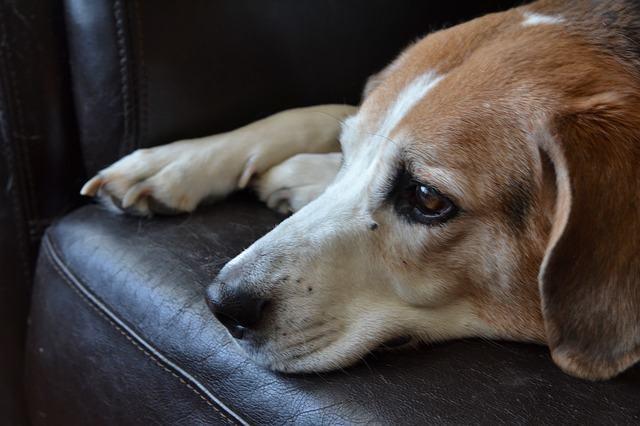 Cachorro triste: o que fazer?