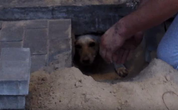 Cadela grávida enterrada viva por 2 dias sobrevive e é resgatada com vida