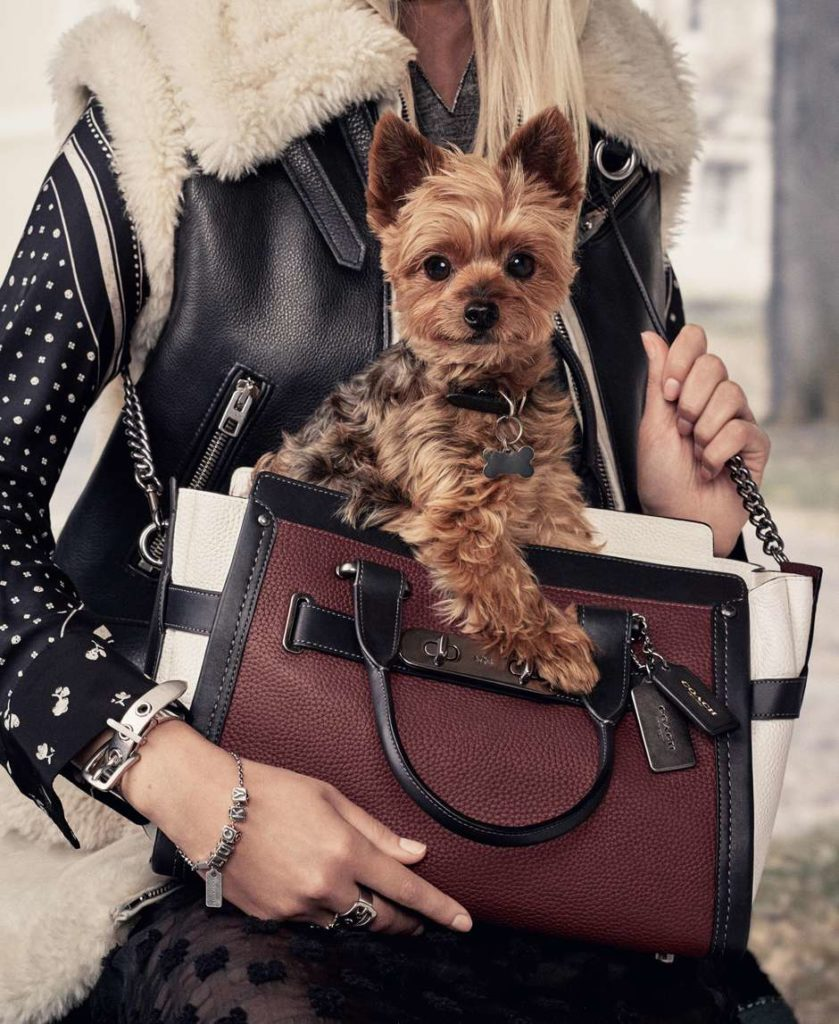 'Dogmodels': cães de Ariana Grande e Miranda Kerr na campanha da Coach