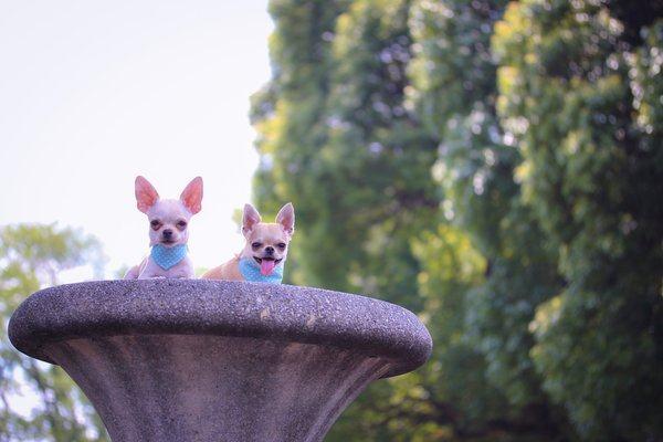 Cães em chafariz