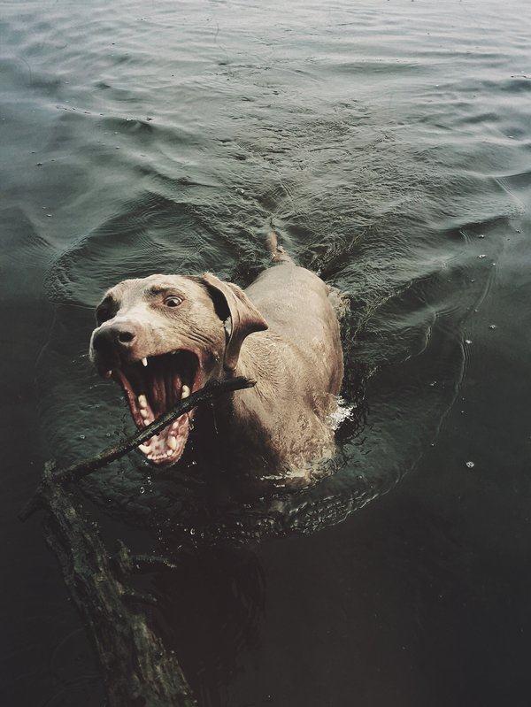 Cão brincando dentro d'água
