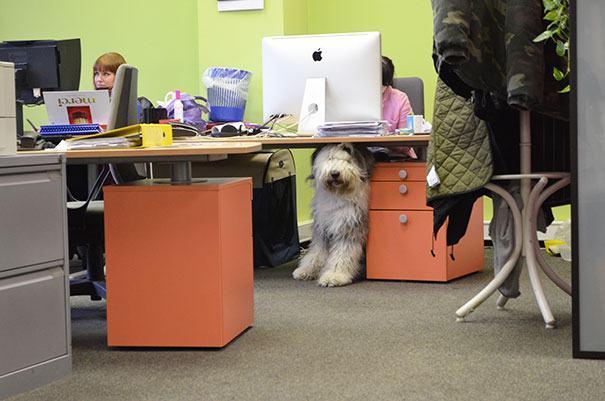Cão debaixo de biro