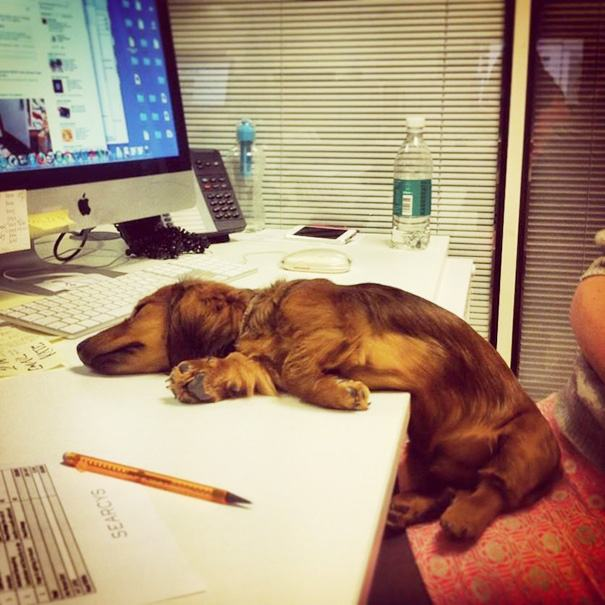 Cão dormindo em frente de computador