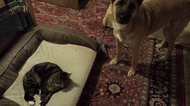 Cão e gato em tapete