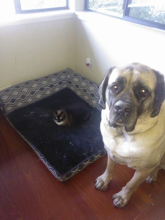 Cão e gato olhando para foto