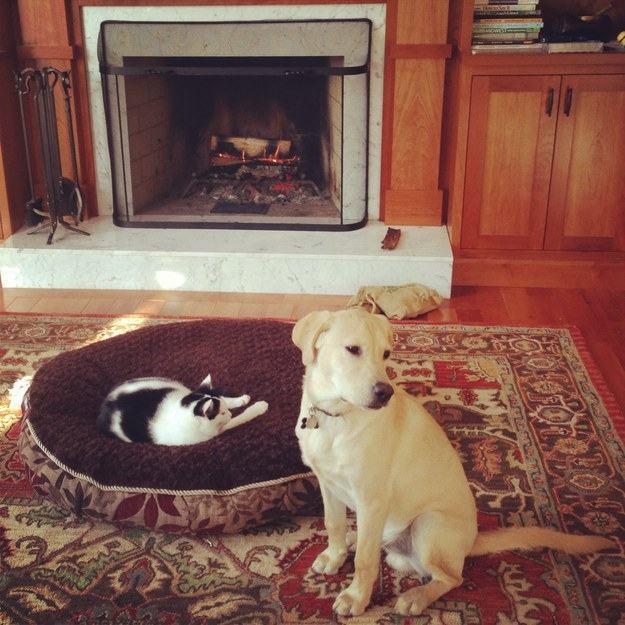 Cão e gato perto de lareira