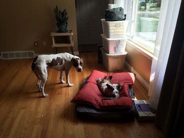 Cão e gato proximos de janela
