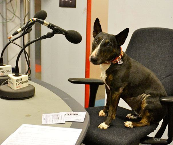 cao-em-estudio-de-radio