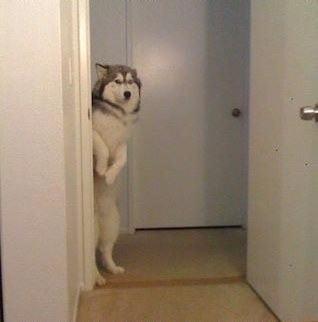 Cão em pé