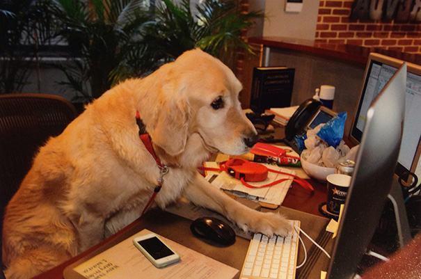 Cão teclando em computador