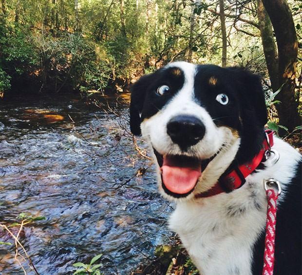 Cãozinho vira sucesso na web por ter a 'pura face da felicidade'