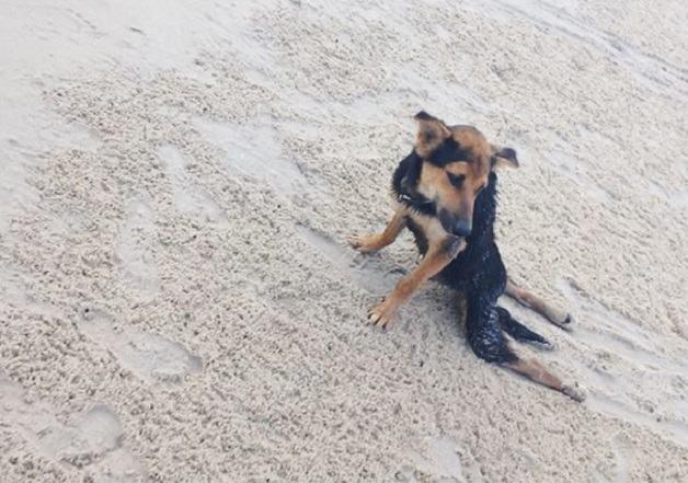 Como a internet pode mudar a vida de um cãozinho