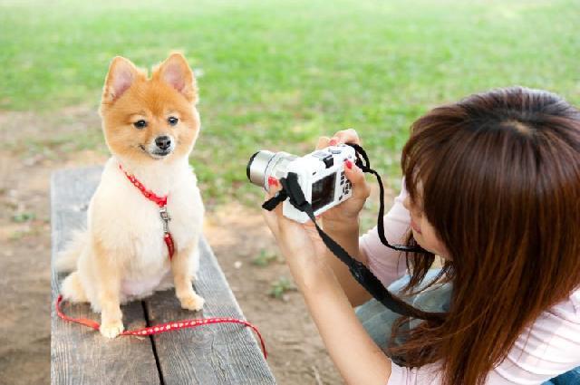 Como tirar fotos de cães?