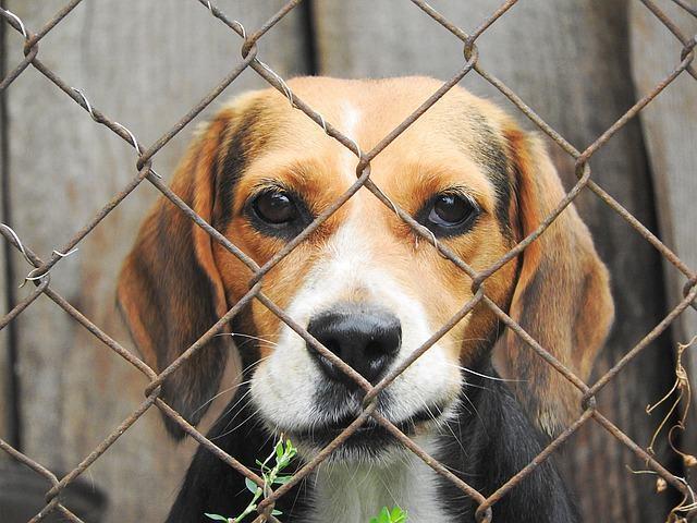 EUA: lei determina que pet shops só podem vender animais de abrigos