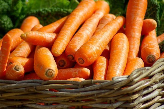 os-efeitos-beneficos-da-cenoura-para-a-visao-e-saude-dos-caes