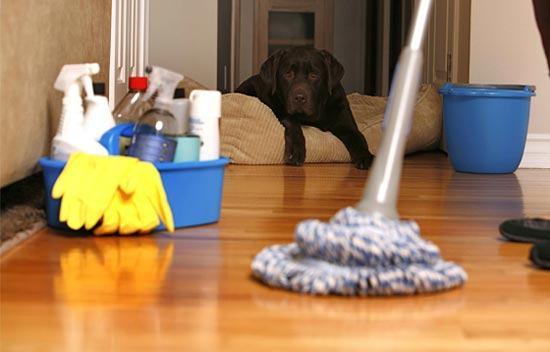 Aprenda receitas caseiras para tirar o cheiro de cachorro da casa