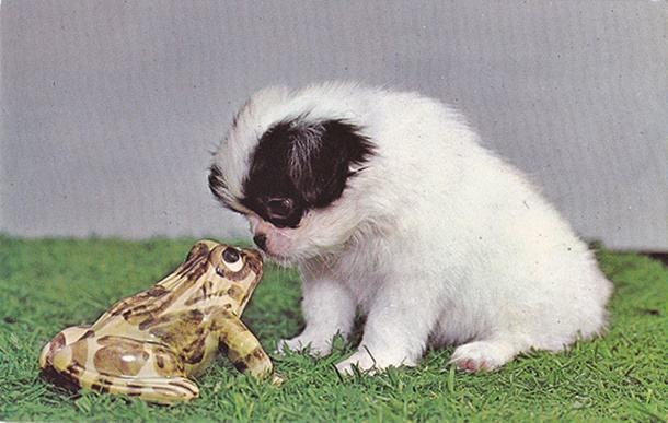 Saiba o que fazer se seu cachorro morder um sapo