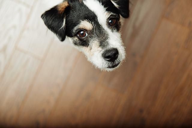 Teste comprova que cães podem ajudar a detectar câncer de próstata