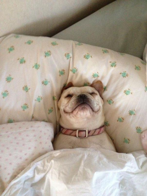 cachorro-deitado-travesseiro