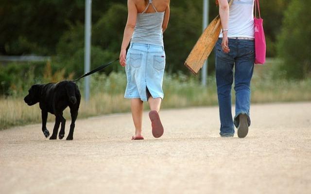 Aprenda como passear com seu cachorro