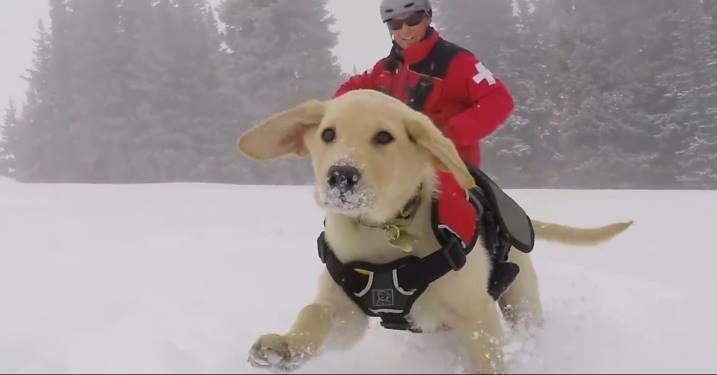 'Levando o tio para dá um rolé na neve'