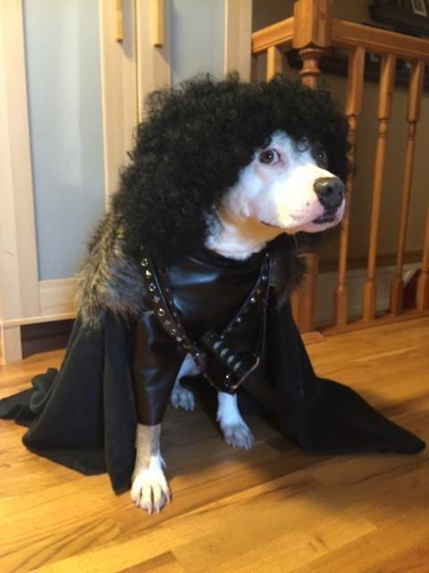 cachorro-com-fantasia-preta