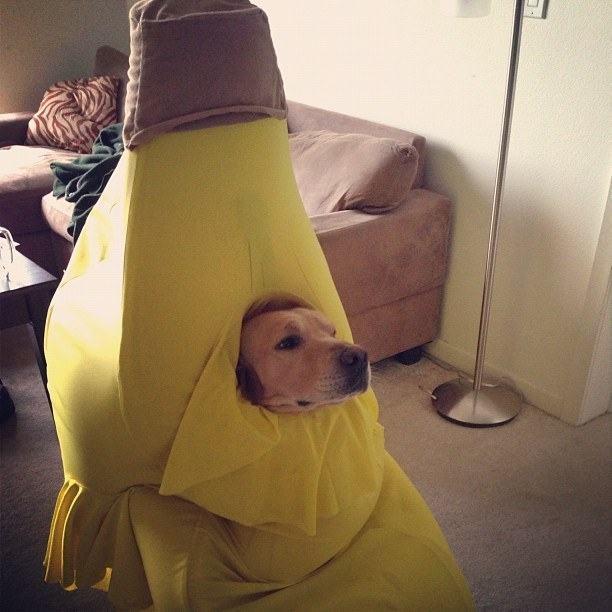 cachorro-fantasia-banana