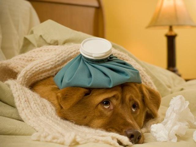 Cachorro sofreu danos na cabeça? Saiba como agir