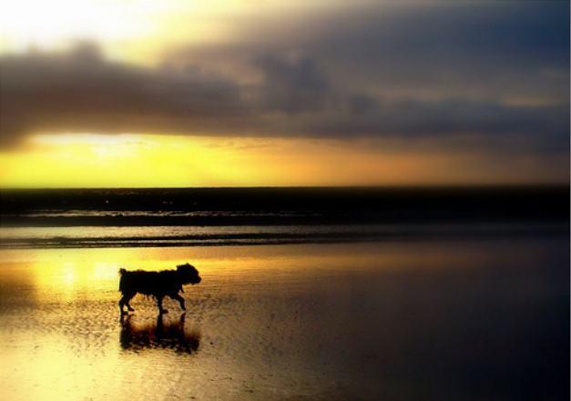 Cão ajuda dona a se recuperar após perda do filho