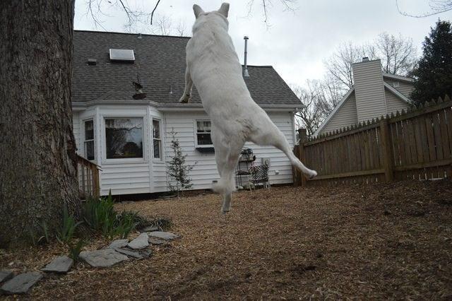 Fazendo da casa uma escada para subir na vida
