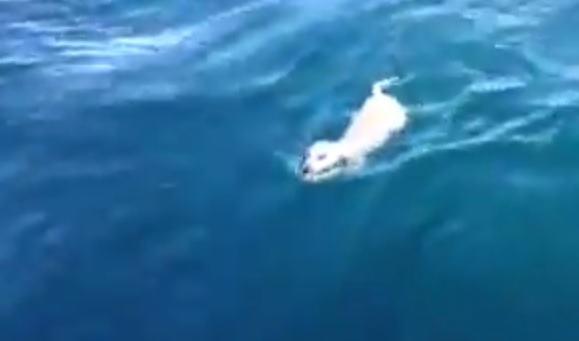 Cão que estava perdido no mar é salvo por italianos