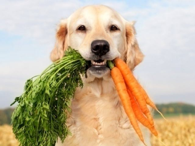 Comidas humanas que o cachorro pode e não pode comer