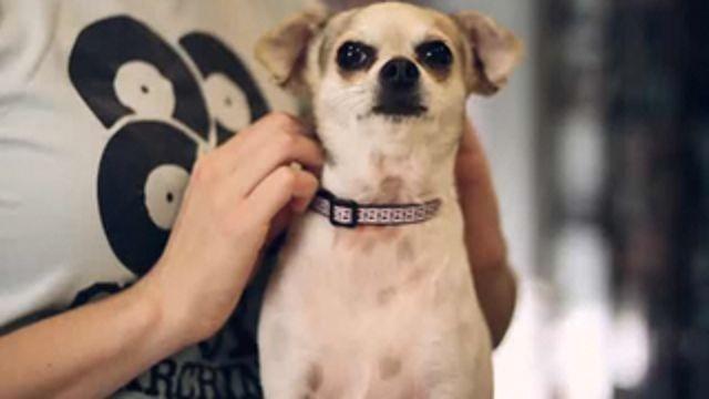 Como agir em casos de asfixia em cachorros?