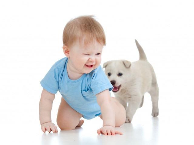 Descubra super dicas para apresentar bebê recém-nascido aos cães