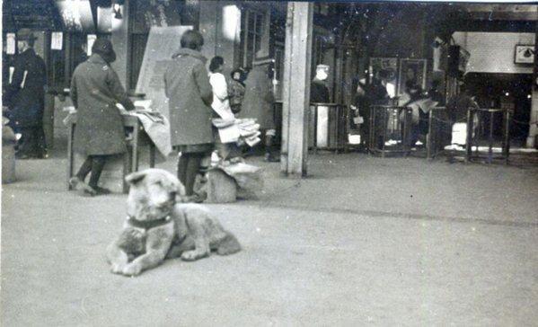 Encontrada foto de cão que ficou mais de 10 anos em estação à espera do dono
