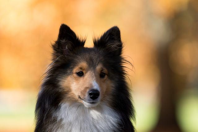Exame mielografia para cachorros