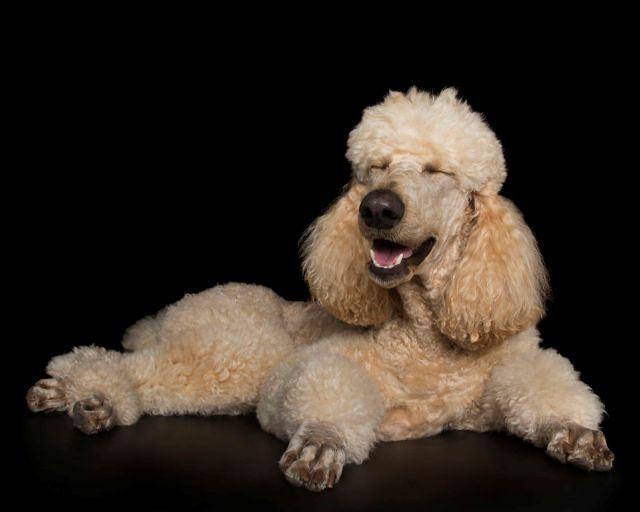 Fofo: fotógrafo captura imagens de cães zen