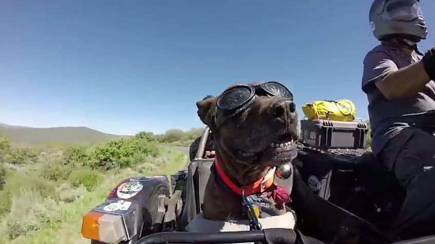 Homem viaja pelo mundo há 10 anos ao lado do seu cão